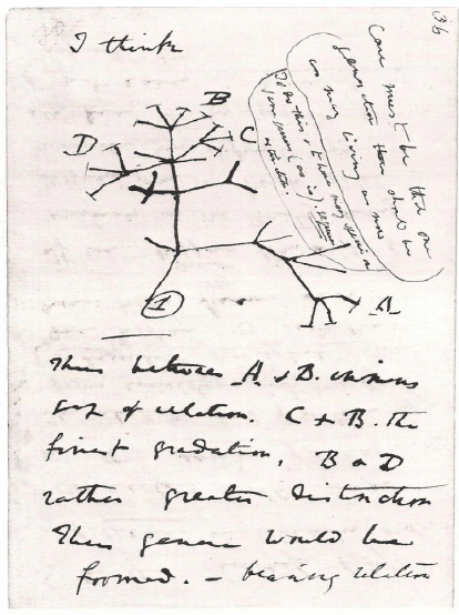 Charles Darwin: Drawing of the tree of evolution (Buzan, 1996, p. 304)