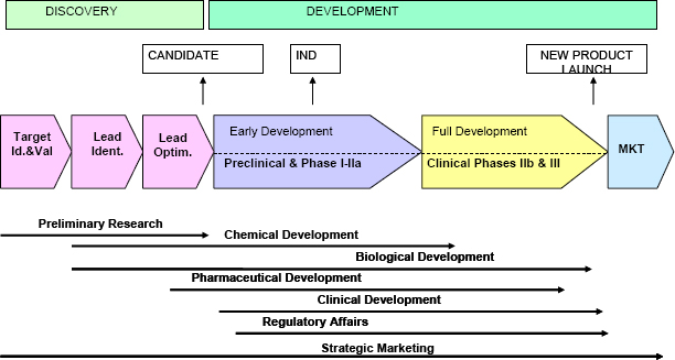 Phases in Drug Discovery & Development